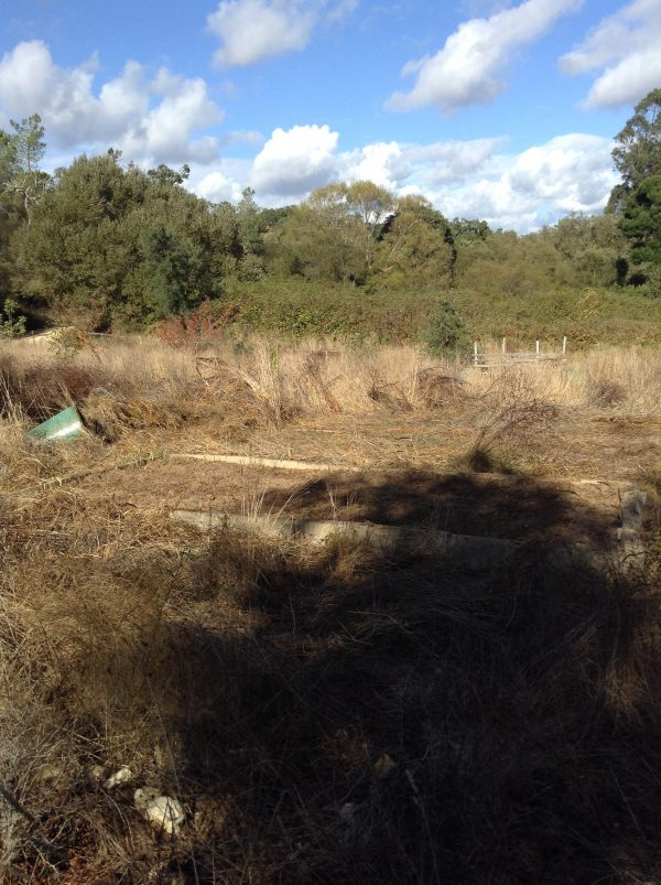 underneath the overgrowth, there were three large garden boxes,  which I've been weeding & seeding
