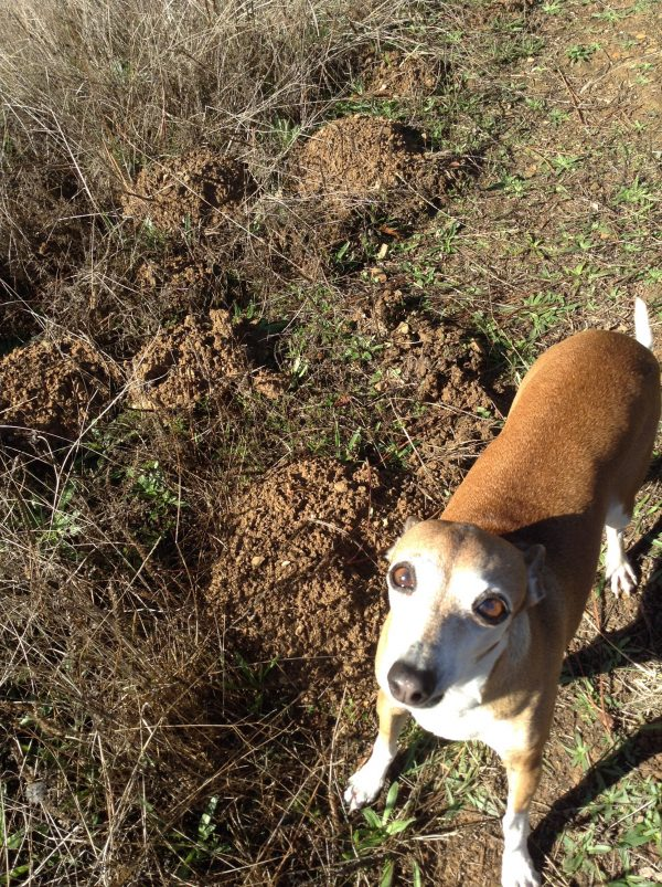 Nutella & some of the molehills
